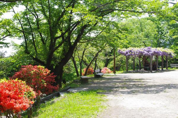 小樽公園 image