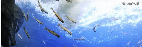 北の大地の水族館 image