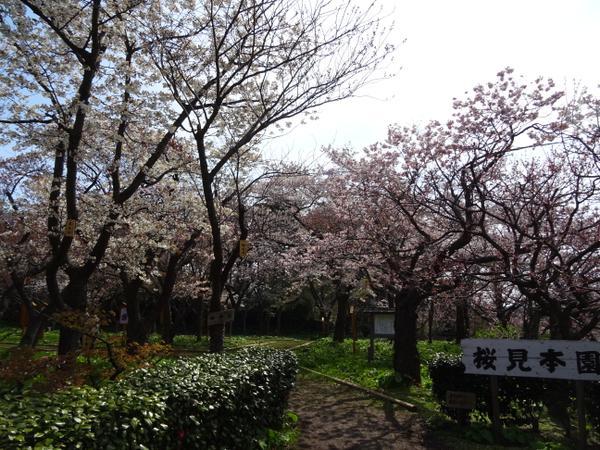 桜見本園 image
