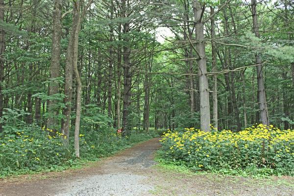 麓郷の森 image