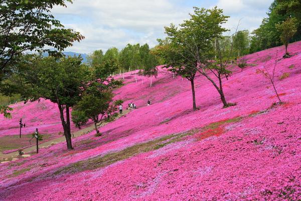 芝ざくら滝上公園 image