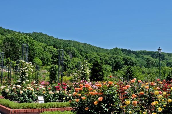 이와미자와 공원 장미원 image