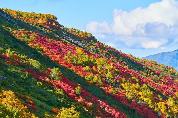 赤岳銀泉台 image