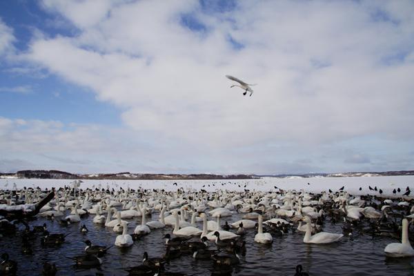 ทะเลสาบคุชชาโระโกะ image