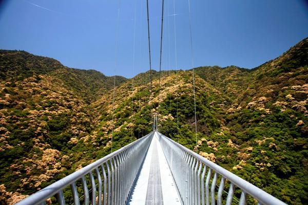 綾の照葉大吊橋 image