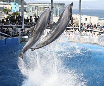 大分マリーンパレス水族館「うみたまご」 image