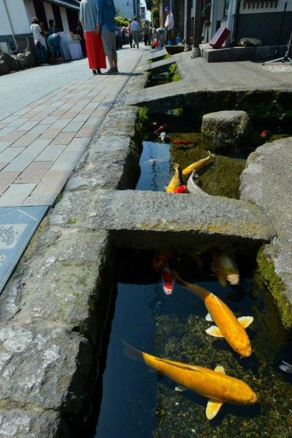 鯉の泳ぐまち image