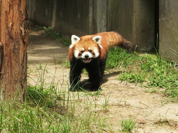 Miyazaki City Phoenix Zoo