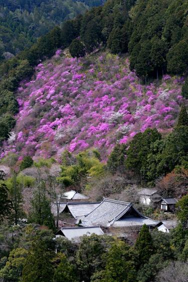 SaimyōjiTemple image