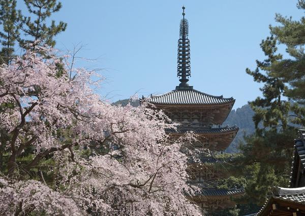 醍醐寺 image
