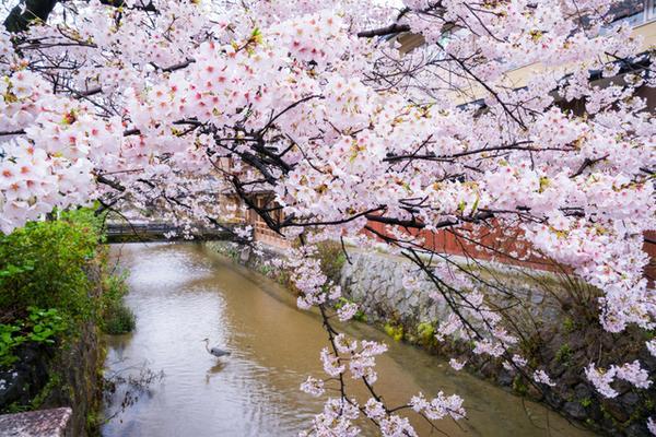 기온 시라카와 image