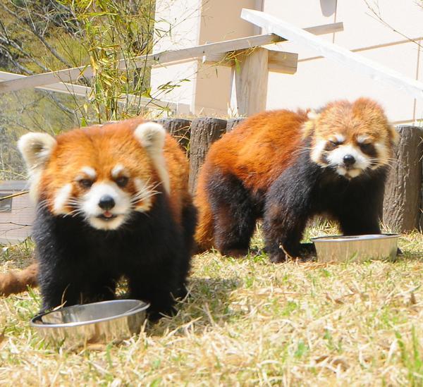 福知山市動物園 image