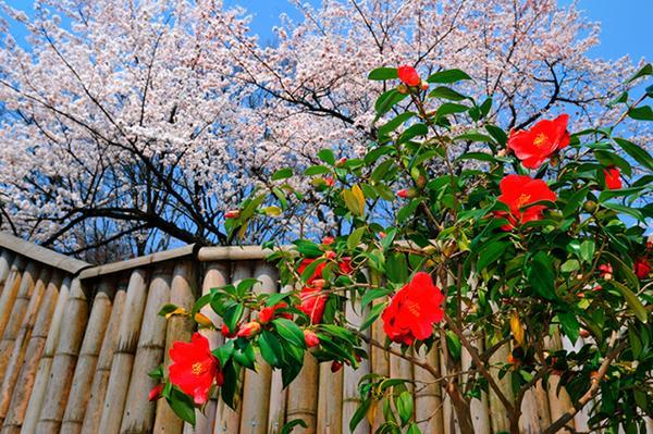 舞鶴自然文化園 image