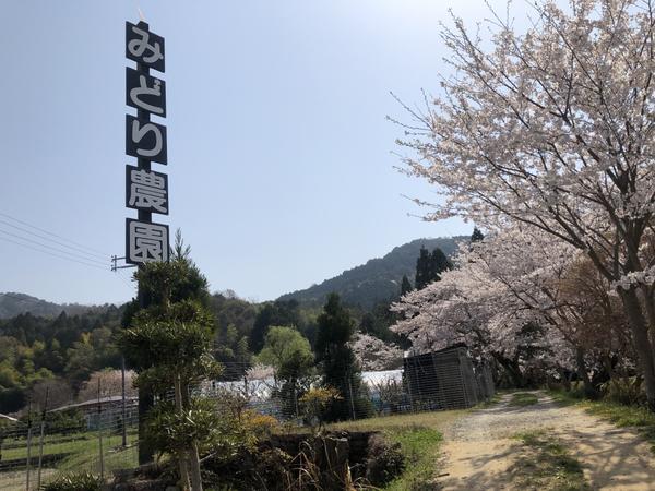 绿色农场 image