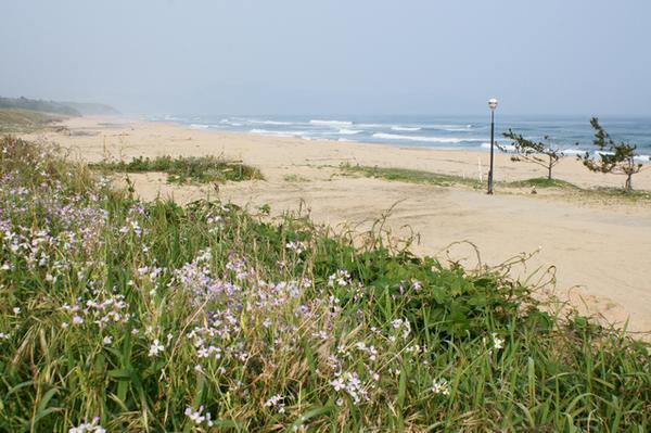 浜詰海水浴場 image