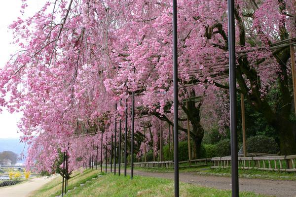 가모가와강 나카라기노미치 image