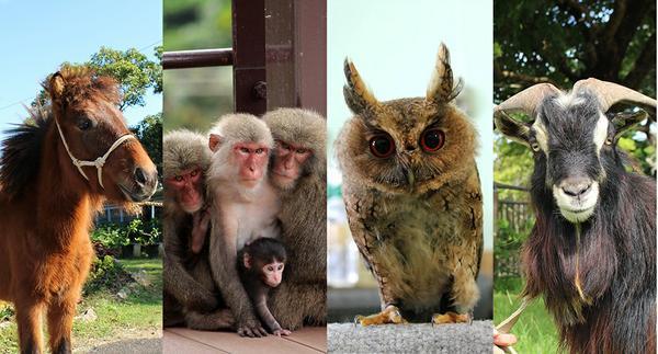 Okinawa Zoo & Museum image