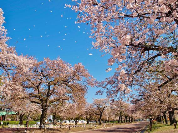 万博記念公園 image