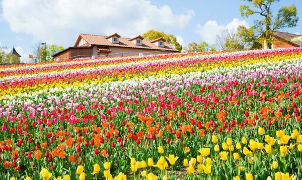 堺・緑のミュージアム ハーベストの丘 image