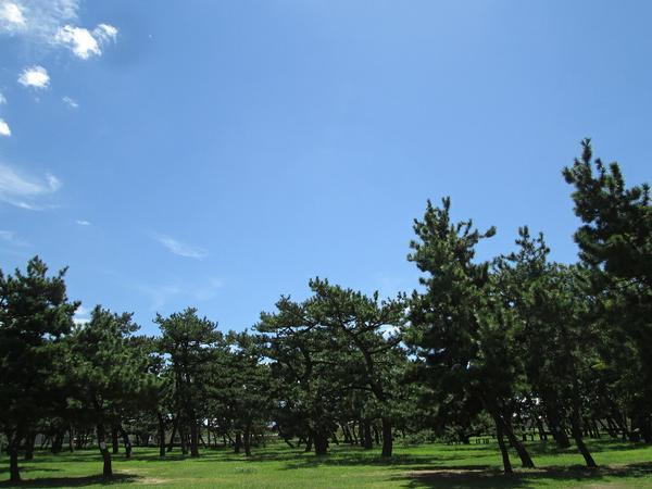 浜寺公園 image