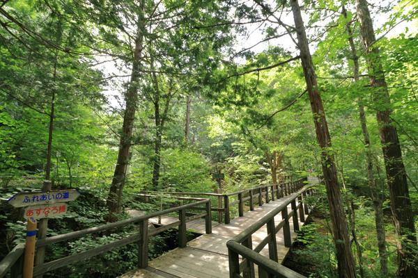 赤泽自然休养林 image