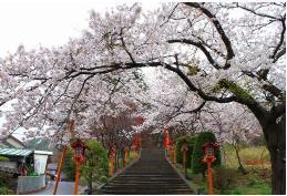 新倉山浅間公園 image