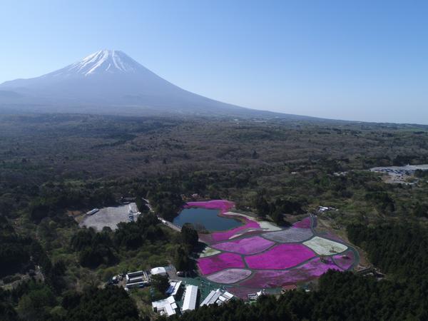 富士芝桜まつり image