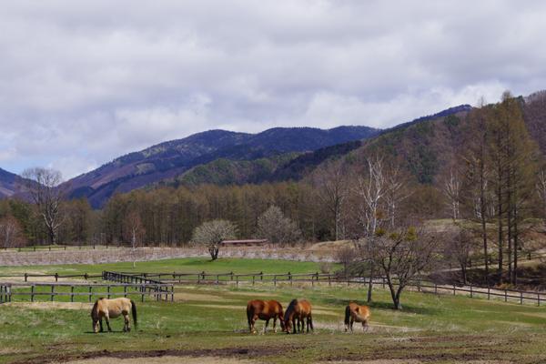 木曽馬の里 木曽馬乗馬センター image