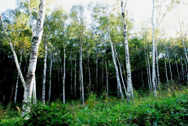 八千穗高原自然园 image