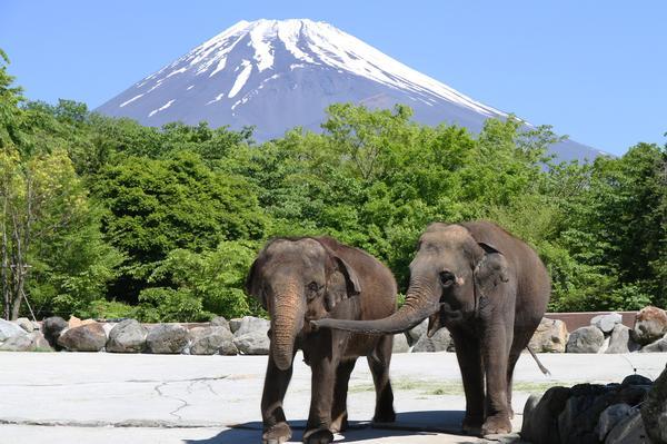 富士サファリパーク image