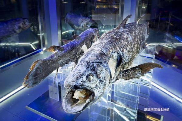 Numazu Deep Sea Aquarium image