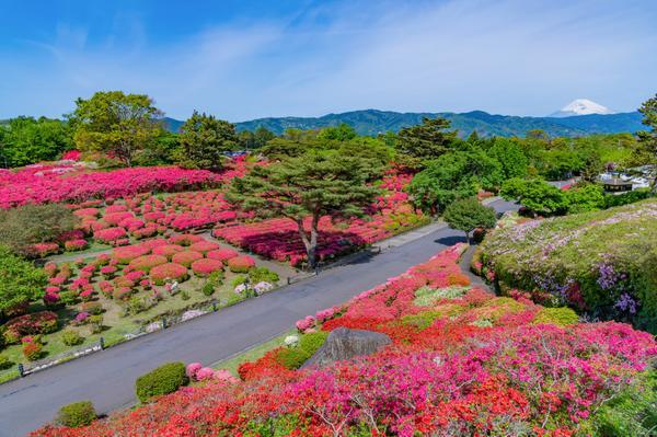 小室山公園 image