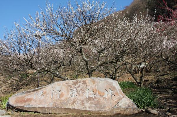 湯河原梅林(幕山公園) image