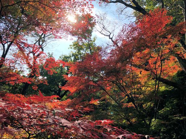 飯山白山森林公園 image
