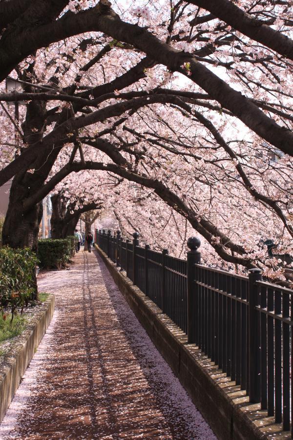 오오카가와 프롬나드 image