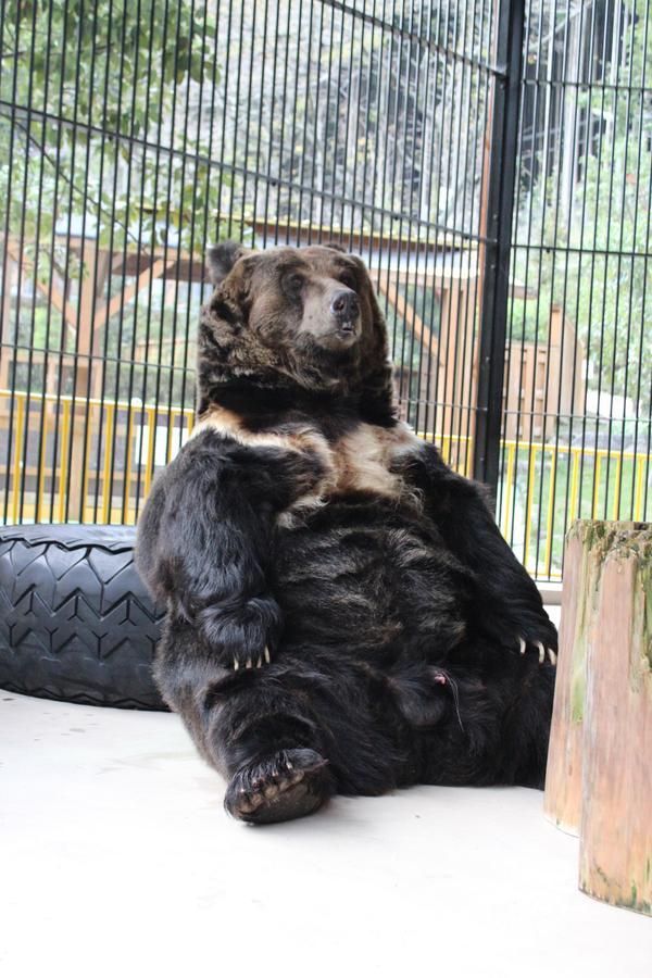 大内山動物園 image