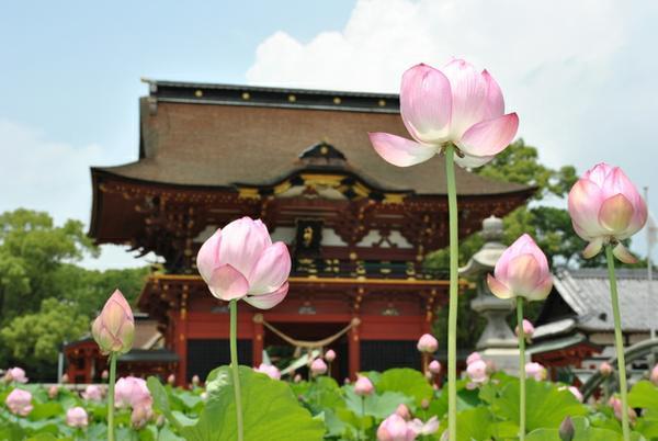 伊賀八幡宮 image