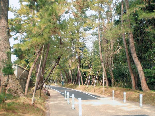 御油の松並木 image