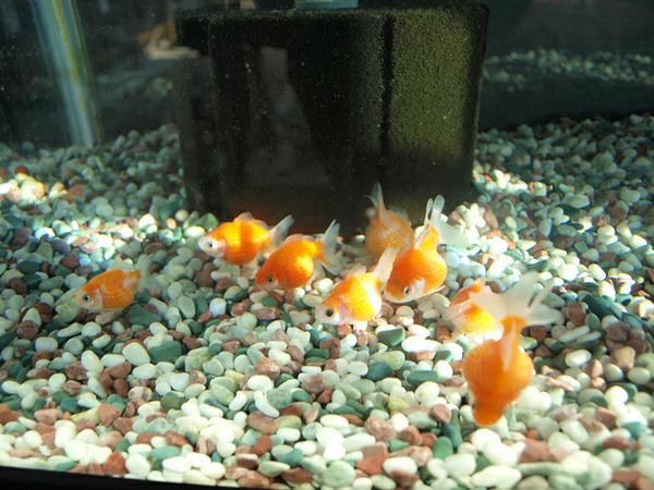 郡山金魚資料館 image