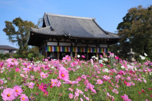 般若寺 image