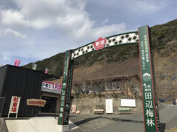 纪州石神 田边梅林 image