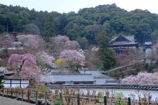総本山 長谷寺 image