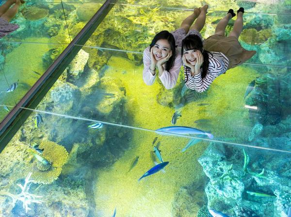 越前松島水族館 image