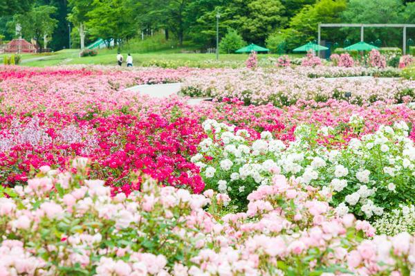 ぎふワールド・ローズガーデン(旧 花フェスタ記念公園) image
