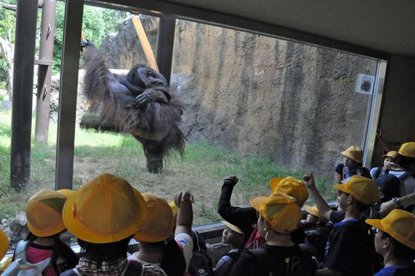 いしかわ動物園 image