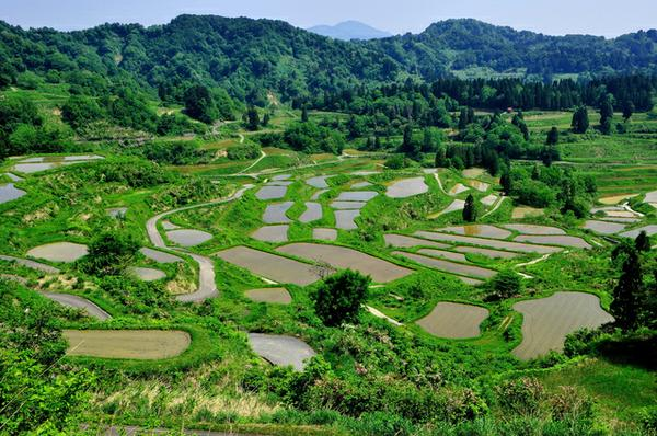 Hoshitoge terraced rice fields image