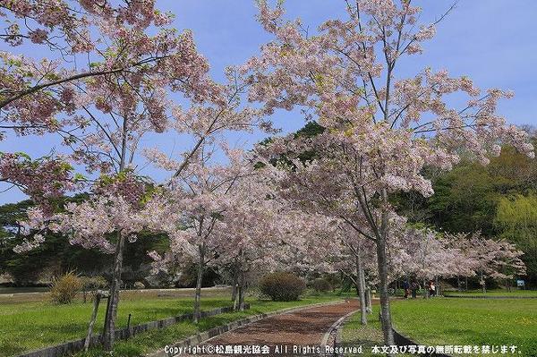 松島 image