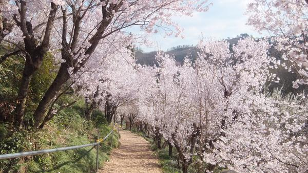 花見山公園 image