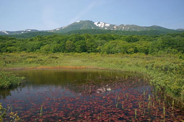 田代平湿原 image