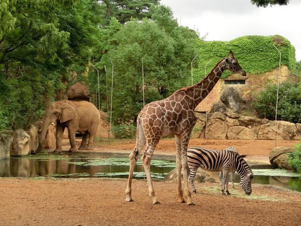八木山動物公園フジサキの杜(仙台市八木山動物公園) image